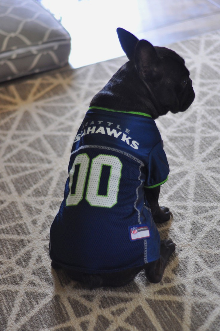 Seattle-Seakhawk-Dog-Jersey-Bordeaux-the-french-bulldog