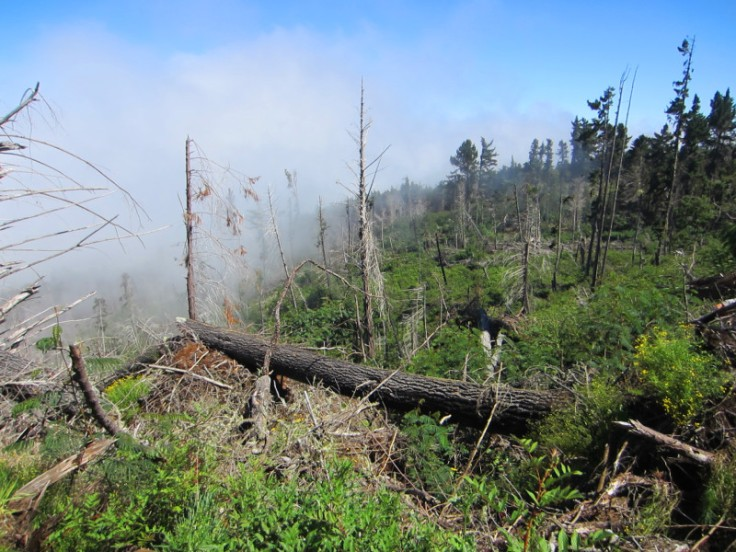 Polipoli Trails on Maui-Foggy Forest Hike-IMG_4861