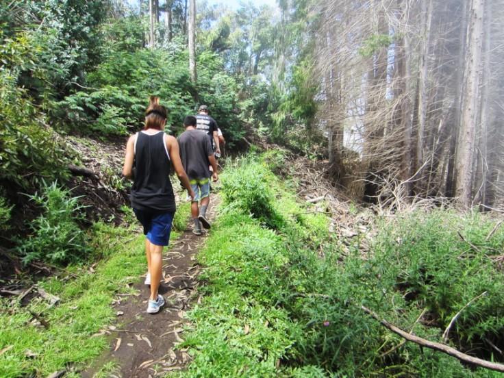 Polipoli Trails on Maui-Foggy Forest Hike-IMG_4863