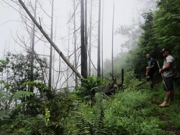 Polipoli Trails on Maui-Foggy Forest Hike-IMG_4889