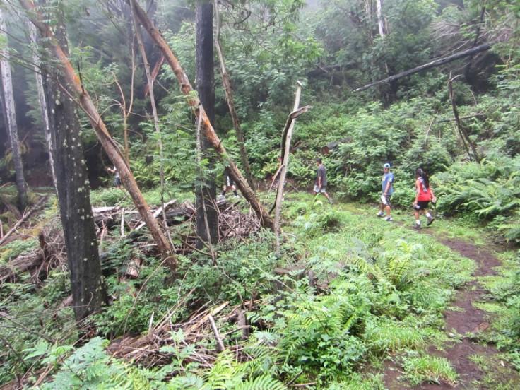 Polipoli Trails on Maui-Foggy Forest Hike-IMG_4891
