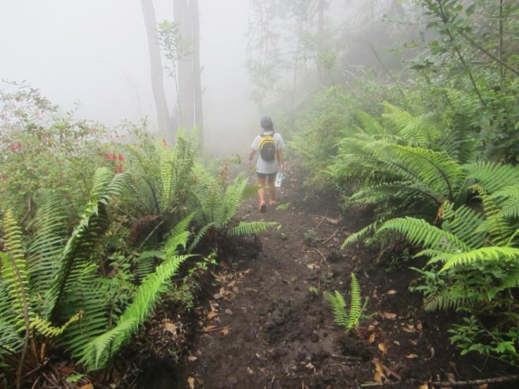 Polipoli Trails on Maui-Foggy Forest Hike-IMG_4916