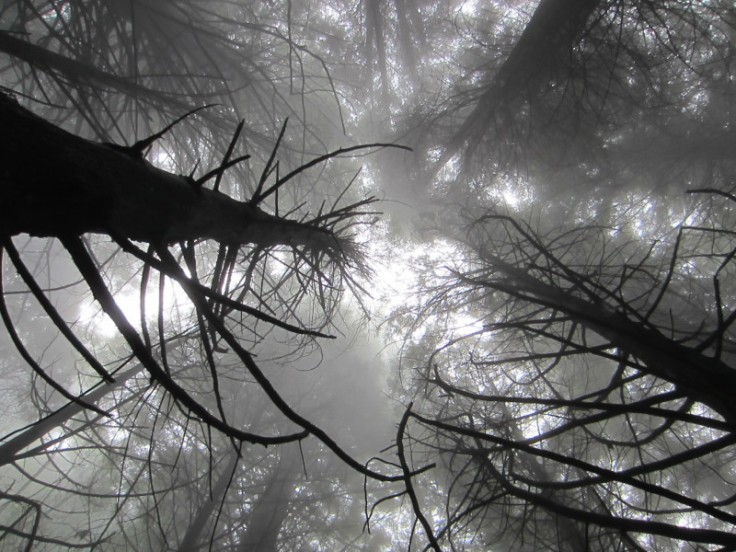 Polipoli Trails on Maui-Foggy Forest Hike-IMG_4939