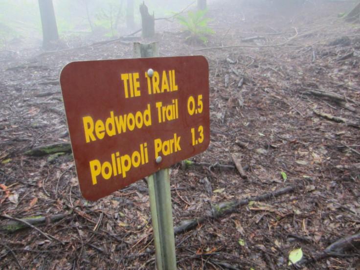 Polipoli Trails on Maui-Foggy Forest Hike-IMG_4941