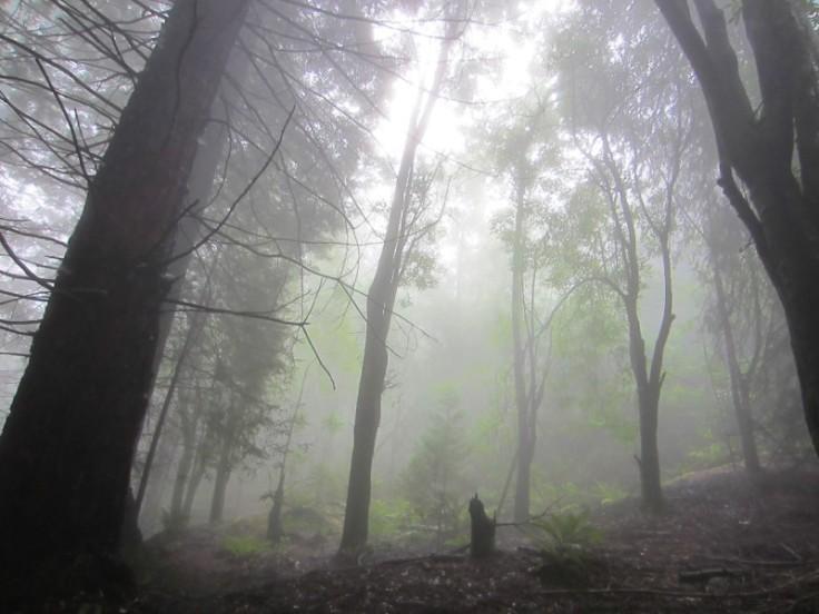 Polipoli Trails on Maui-Foggy Forest Hike-IMG_4943