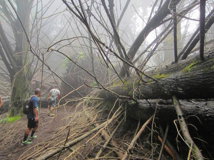 Polipoli Trails on Maui-Foggy Forest Hike-IMG_4963
