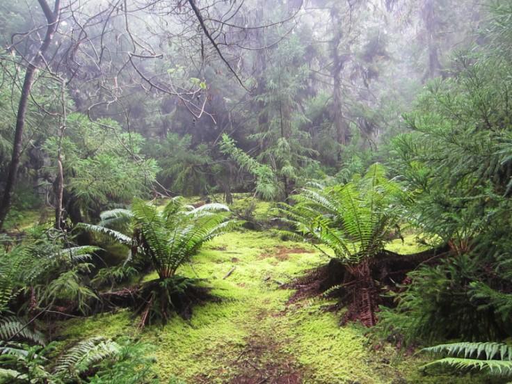 Polipoli Trails on Maui-Foggy Forest Hike-IMG_4964