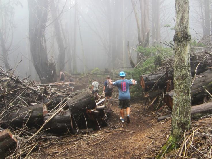Polipoli Trails on Maui-Foggy Forest Hike-IMG_4966