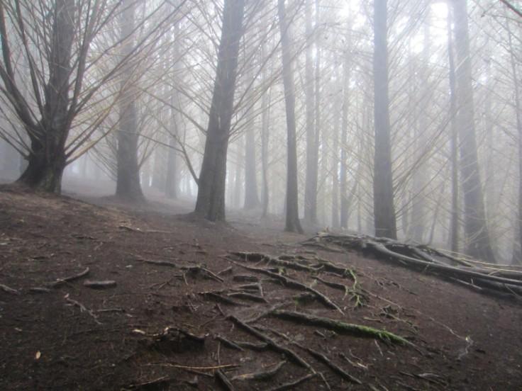 Polipoli Trails on Maui-Foggy Forest Hike-IMG_4977