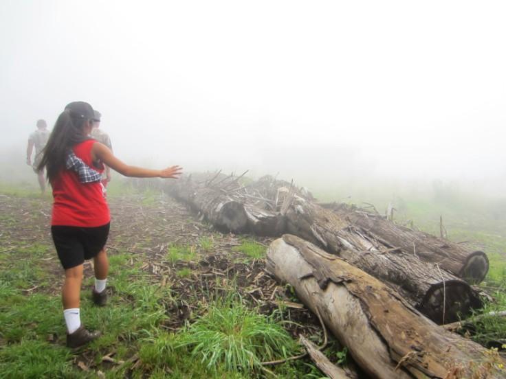 Polipoli Trails on Maui-Foggy Forest Hike-IMG_4980