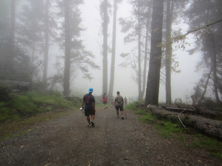 Polipoli Trails on Maui-Foggy Forest Hike