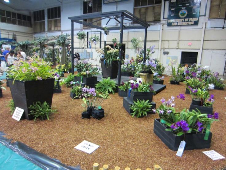 maui fair_orchid garden
