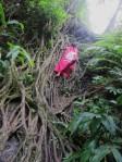 makamakaole, stream, waterfall, maui, hawaii, nature, adventure, waihee, banyan tree, go cougs, WSU