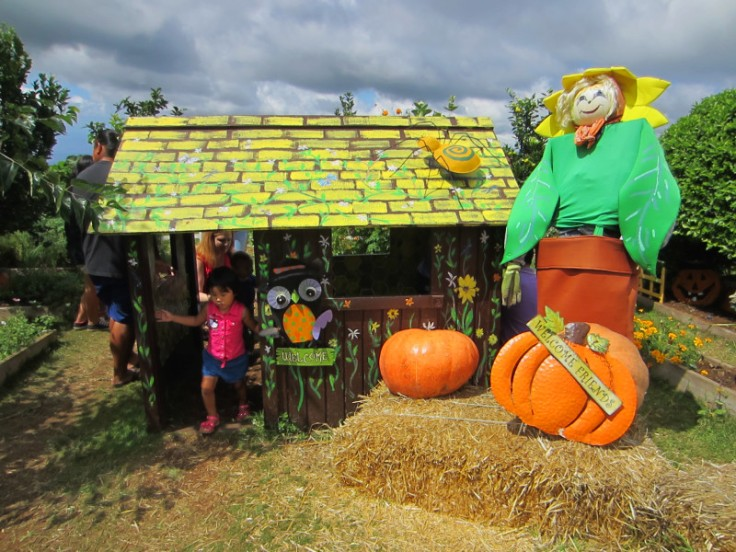 Kula Country Farm_Pumpkin Patch_Maui_Hawaii