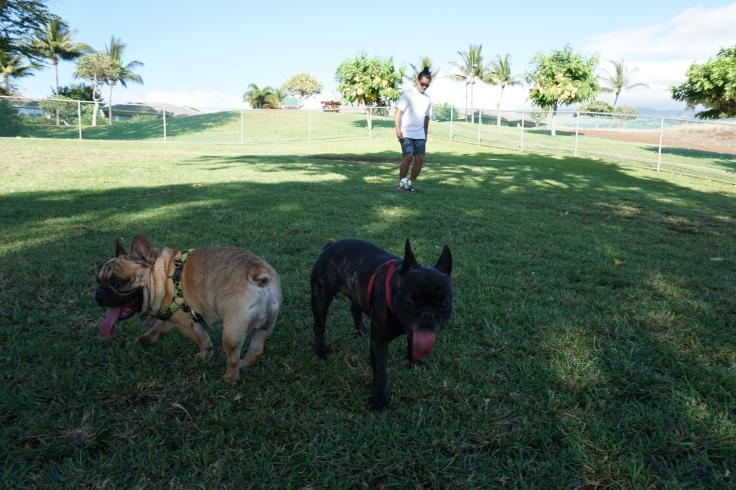 Dogs Day_11.JPG