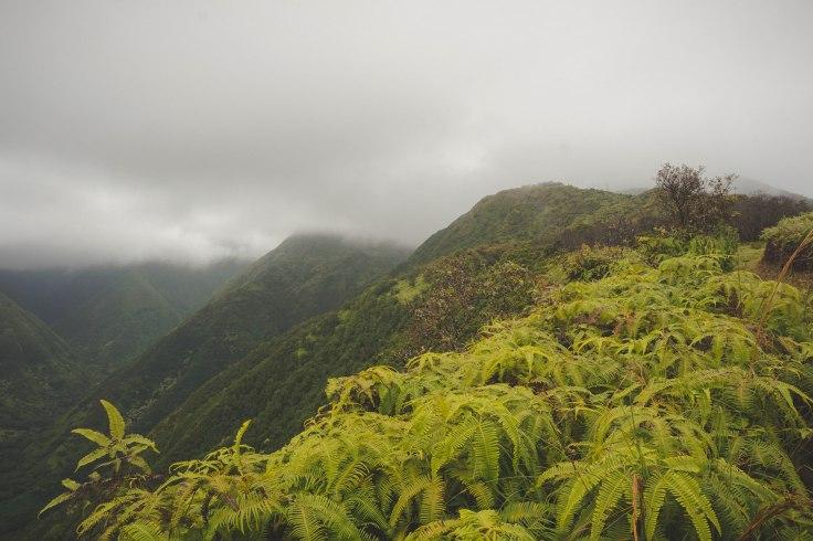Waihee Ridge Trail_31.jpg