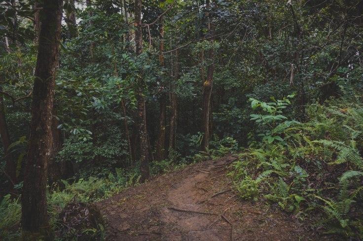Waihee Ridge Trail_57