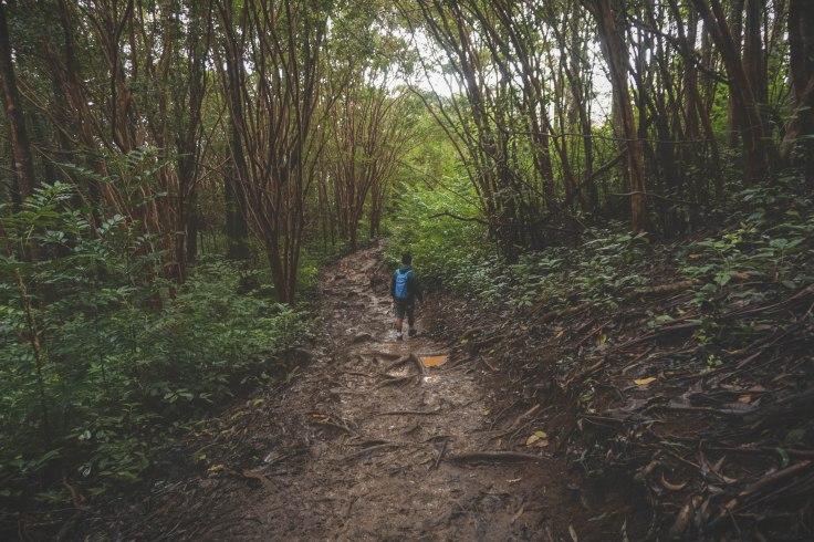 Waihee Ridge Trail_58