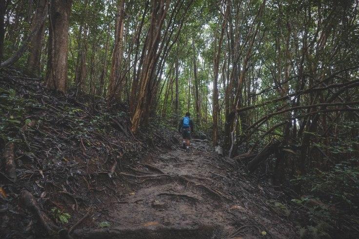 Waihee Ridge Trail_9